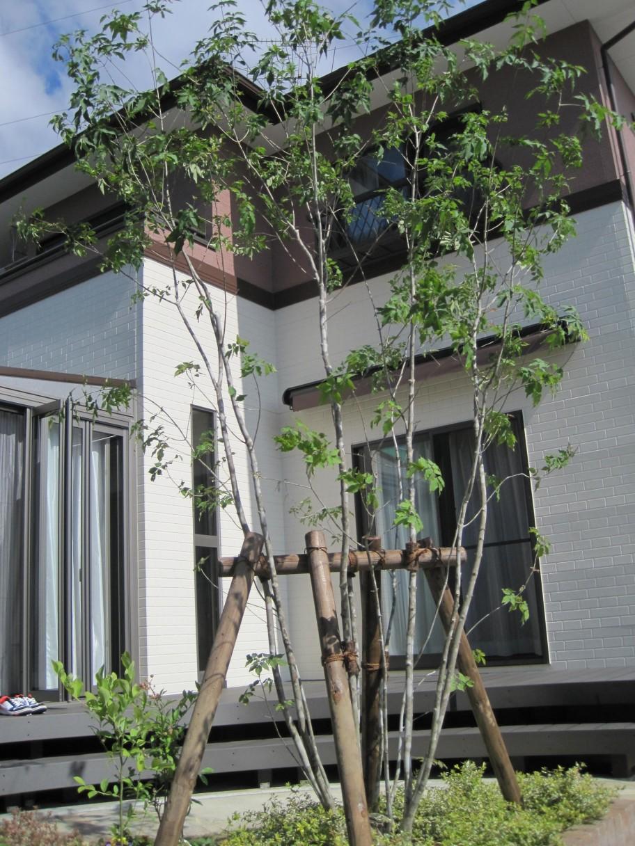 東松島市植栽工事 完成した様子